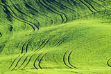 USA, Washington State, Palouse. Rolling Hills Covered by Wheat Fields Photographic Print by Terry Eggers
