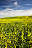 USA, Washington, Palouse. Rolling Hills Covered by Canola and Peas Photographic Print by Terry Eggers