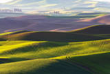 USA, Washington, Palouse. Rolling Hills Covered by Fields of Peas Photographic Print by Terry Eggers