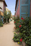 Hibiscus on Goree Street Corner, Goree Island, Senegal Photographic Print by Charles Cecil