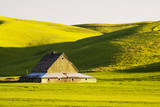 USA, Washington, Palouse. Green Barn in a Field of Spring Wheat (Pr) Photographic Print by Terry Eggers