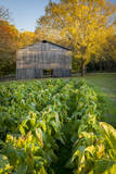 Old Tobacco Farm Along the Natchez Trace, Tennessee, USA Photographic Print by Brian Jannsen