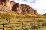 USA, Utah, Capitol Reef, Fruit Orchard with Waterpocket Fold Photographic Print by Jamie & Judy Wild