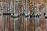 USA, Georgia, Cypress Swamp with Fall Reflections Photographic Print by Joanne Wells