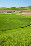 USA, Washington, Palouse. Farm with Fresh Crop of Winter Wheat (Pr) Photographic Print by Terry Eggers