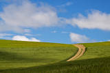 USA, Washington, Palouse. Backcountry Road Through Spring Wheat Field Photographic Print by Terry Eggers