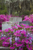 USA, Georgia, Savannah, Azaleas and Wisteria at Bonaventure Cemetery Photographic Print by Joanne Wells