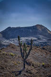 Galapagos, Ecuador, Sierra Negra. Volcan Chico and Candelabra Cactus Photographic Print by Mark Williford