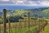 View from Knights Gambit Vineyard, Dundee, Yamhill County, Oregon, USA Photographic Print by Janis Miglavs