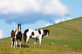 USA, Washington State, Saint John. Horses on the Hillside Photographic Print by Terry Eggers