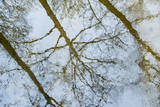 USA, New Jersey, Oldwick. Sycamore Trees Reflect in Lamington River Photographic Print by Alison Jones