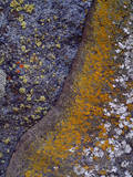 USA, California, Cleveland National Forest. Abstract of Lichen Photographic Print by  Jaynes Gallery