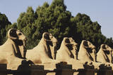 Egypt, Luxor, Ram Headed Sphinx at Karnak Temple Photographic Print by Claudia Adams