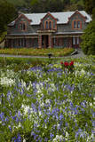 Isel House and Flowers, Stoke, Nelson, South Island, New Zealand Photographic Print by David Wall
