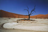 Namibia, Sossusvlei, Deadvlei, Dead Tree with Water Mark Photographic Print by Claudia Adams