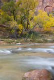 USA, Utah, Zion National Park, Virgin River Scene Photographic Print by Jamie & Judy Wild