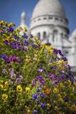 Flowers Below Basilique Du Sacre Coeur in Montmartre, Paris, France Photographic Print by Brian Jannsen