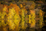 Autumn Color at Radnor Lake, Nashville, Tennessee, USA Photographic Print by Brian Jannsen