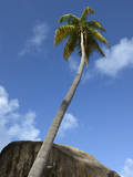 Caribbean, British Virgin Islands. Palm Tree in Spring Bay, the Baths Photographic Print by Kevin Oke
