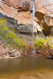 USA, Utah, Zion National Park, Upper Emerald Pool Photographic Print by Jamie & Judy Wild