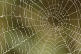 Florida, Dew Spider Web, Dina Darlina Photographic Print by Claudia Adams