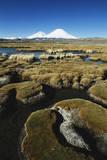 Chile, Altiplano, Payachalas Volcanos, Bofedal Parinacota, Lauca Photographic Print by Andres Morya Hinojosa