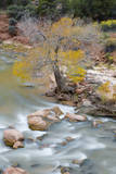 USA, Utah, Zion National Park, Virgin River and Cottonwood Tree Photographic Print by Jamie & Judy Wild