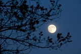 Full Moon in Winter Photographic Print by Craig Tuttle