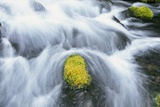 Mossy Rock in Stream Photographic Print by Craig Tuttle