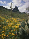 Picacho Peak State Park Photographic Print by James Randklev