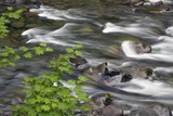 Sol Duc River Flowing over Rocks Photographic Print by James Randklev