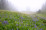 Morning Fog and Wildflowers, Mount Rainier National Park, Washington State Photographic Print by Craig Tuttle