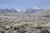 Sonoran Desert in Winter Photographic Print by James Randklev