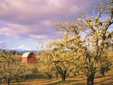 Barn in Hood River Valley Photographic Print by Craig Tuttle
