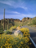 Desert Road with Cactus and Brittlebush Photographic Print by James Randklev