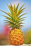 Pineapple Reproduction photographique par Ron Dahlquist