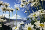 Wildflowers in Bloom Along Coastline Photographic Print by Craig Tuttle
