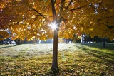Sunshine Through a Fall Tree Photographic Print by Craig Tuttle
