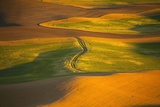 Wheat Field in Afternoon Sun from Steptoe Butte Photographic Print by Craig Tuttle
