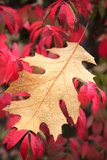 Water Droplets on a Fall Leaf Photographic Print by Craig Tuttle