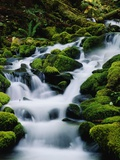 Moss-Covered Boulders at Sol Duc Falls Photographic Print by James Randklev