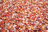 Pile of Autumn Leaves Photographic Print by Craig Tuttle
