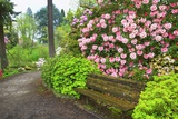 Spring Flowers in Crystal Springs Rhododendron Garden Photographic Print by Craig Tuttle