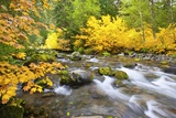 Fall Colors Along Santiam River, Willamette National Forest, Oregon Cascades, Pacific Northwest Photographic Print by Craig Tuttle