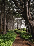 Spruce Trail at Kalaloch Beach Photographic Print by James Randklev
