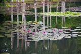 Water Lilies in Hawaii Photographic Print by Ron Dahlquist