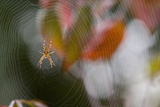 Close-Up of Spider on Spiderweb Photographic Print by Craig Tuttle