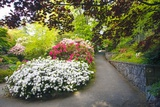 Spring Flowers in Crystal Springs Rhododendron Garden, Portland, Oregon Photographic Print by Craig Tuttle