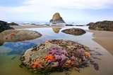 Starfish and Rock Formations Along Indian Beach, Oregon Coast Photographic Print by Craig Tuttle