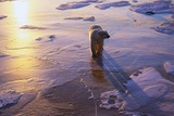 Polar Bear on Ice at Sunrise Photographic Print by Darrell Gulin